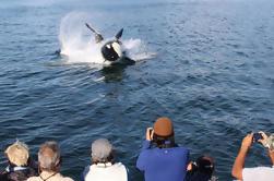 Juneau Shore Excursion: Whale-Watching Cruise und Meeresfrüchte Mahlzeit auf Mt Roberts