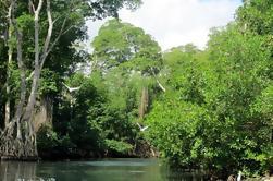 The Original Mangrove and Beach Experience de Punta Cana