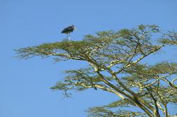 Parque Nacional de Nairobi, Karen Blixen y Jirafas