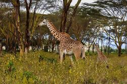 Excursão de um dia ao Parque Nacional Hell's Gate de Nairobi