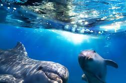Gibraltar Dolphin Cruise vanuit Malaga