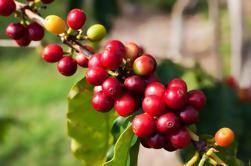 Excursión de un día a Jardín: Café y visita turística colombiana desde Medellín