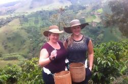 Tour de la Ciudad y el Café en la Ciudad de Medellín