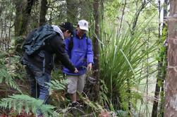 Excursión a la Bahía de las Islas: Puketi Rainforest Guided Walk