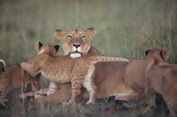 Safari de 7 noches en Kenia desde Nairobi