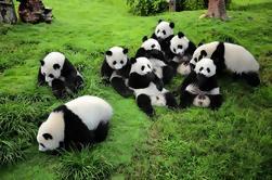 Voluntario para el Día en Chengdu Dujiangyan Panda Base Conservation Center