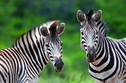 Excursão de um dia ao Parque Hluhluwe Imfolozi de Durban