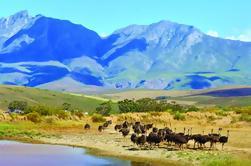 Tour guiado de 4 días de la ruta del jardín desde Ciudad del Cabo
