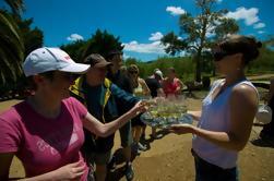 Comida y degustación de vinos Tour de la Isla Waiheke desde Auckland