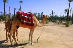 Excursión de 1,5 horas en grupo Camel Ride Palm Grove