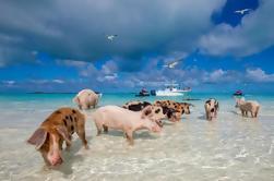 Excursión de un día a Bimini Bahamas desde Miami