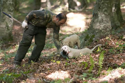 Private Tour: Truffle-Hunting Experience