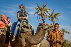 Desert y Palm Grove Camel Ride desde Marrakech
