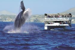 Crucero de observación de ballenas en Los Cabos