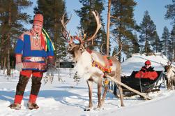 Safari de renos de Laponia de Rovaniemi incluyendo Sleigh Ride