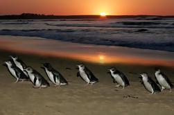 Viaje de un día a Phillip Island desde Melbourne Incluyendo el pase de entrada Eureka Skydeck