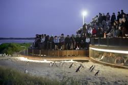 Pequeño grupo Phillip Island y Fauna Destacan un día de viaje desde Melbourne Incluyendo Penguin Plus Plataforma de visualización