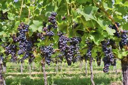 Excursión privada al vino de Irpinia desde Nápoles