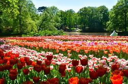 Excursión de un día guiada por Keukenhof Gardens desde Amsterdam