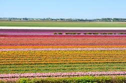 Excursão de um dia em grupo pequeno a Keukenhof e Flowerfields - Volendam e Zaanse Schans de Amsterdão