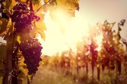 Tour Privado: Región Ribatejo con Degustación de Vinos
