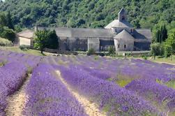 Pequeño grupo de lavanda Tour a Gordes, la abadía de Senanque y Roussillon o Sault de Avignon