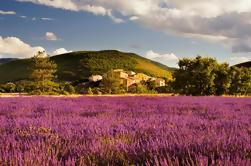 Lavender Fields Tour van Avignon