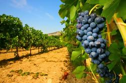 Wijnproeverij in Châteauneuf du Pape van Avignon