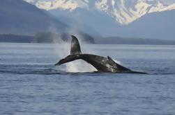 Icelandic Horse Riding Tour og Whale Watching Cruise fra Reykjavik