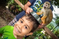 Safari Tour de Monkeyland e plantação de café