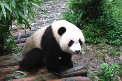 Private Day of Giant Panda Breeding Center and Local Life Experience Tour