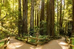 Woods y el vino: Medio día Sonoma Wine Tour más Muir Woods National Monument