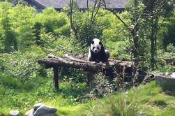 Private Day Tour: Dujiangyan Panda Base and Dujiangyan Irrigation Project from Chengdu