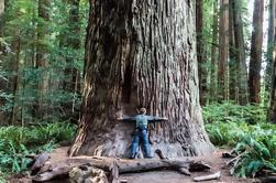Hippie Tour de Muir Woods, Puente Golden Gate y Sausalito