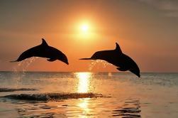 Tour de día completo con observación de delfines