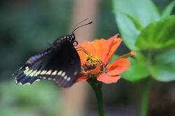 Tour Privado: Experiencia de Flor de Medellín en Santa