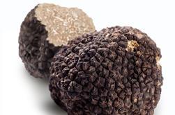 Truffle Hunting Ervaring met Gourmet truffel Lunch van Florence