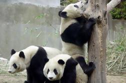 14-Day in piccola Gruppo China Viaggi: Pechino, Xi'an, Chengdu, Yangtze River Cruise, Chongqing e Shanghai