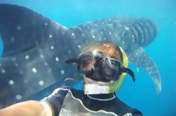 Snorkel y nadar con una excursión de tiburón ballena