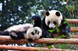 10 giorni migliori della Cina con Panda Private Tour: Pechino, Xian, Chengdu e Shanghai
