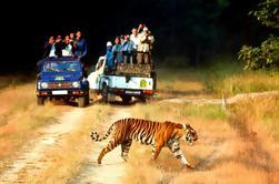 Excursión de 6 noches al Triángulo Dorado con Ranthambore desde Delhi