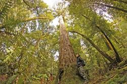 Excursión de día completo en el bosque de Whirinaki