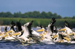 Excursión privada de un día entero al fascinante delta del Danubio desde Bucarest