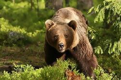 Excursión de día completo de Drácula, LiBEARty Brown Bear Sanctuary, Ciudad de Brasov y Fortaleza de Rasnov