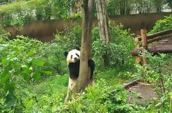 Un Día Privado Personalizar-capaz Chengdu Panda Breeding & Research Center y puntos culminantes de la ciudad