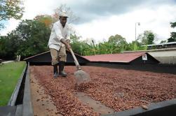 Tour de Plantación de Cacao y Chocolate