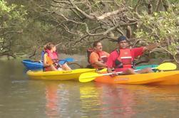 Manglares Magic Goa Kayaking Experiencia