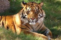 7 dias de turismo independente de Deli, Agra, Jaipur com Tiger Safari e Private Car