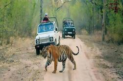 6-Day Private Tour De Delhi para Jaipur inclui Ranthambore e Agra Visita