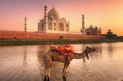 Tour Privado: Excursión de Agra y Jaipur de Día Completo desde Delhi